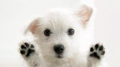 西班牙宠物用品网购推荐